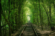 """Trees Formed A Tunnel Which Is Called """"Tunnel Of Love"""". Toned Image."""