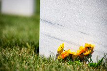 Daisies In Front Of Marble