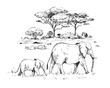Sketch of the African savanna with trees and elephants. Hand drawn illustrtion converted to vector.