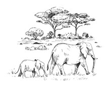 Sketch Of The African Savanna ...