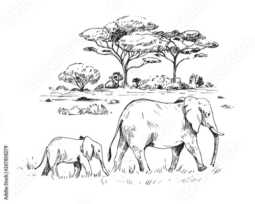 Fotografie, Obraz Sketch of the African savanna with trees and elephants
