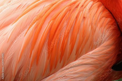Foto op Aluminium Flamingo Multishades of Pink Feathers