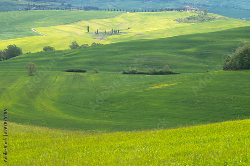 Fotobehang Rijstvelden Val d'Orcia landscape in spring. Hills of Tuscany. Cypresses, hills, yellow rapeseed fields and green meadows. Val d'Orcia, Siena, Tuscany, Italy - May, 2019.
