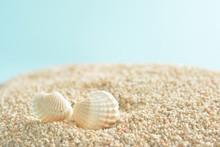 貝殻 サンゴ砂