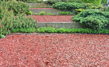 The Terraces Of The City Park With Evergreen Coniferous Bushes Made Of Compost, Concrete And Bark