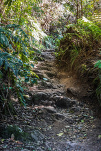 Rocky Path In The Mountain Forest
