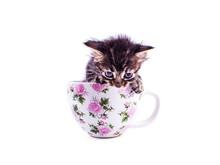 Little Tabby Kitten In A Big W...