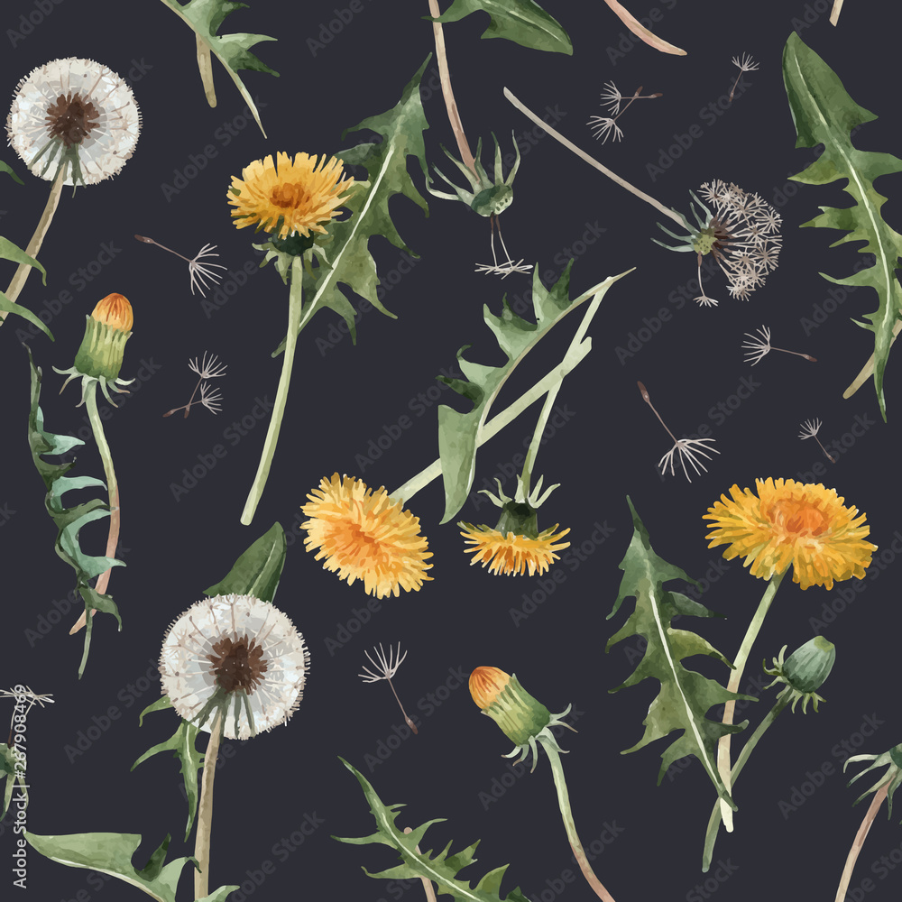 Fototapety, obrazy: Watercolor dandelion blowball vector pattern