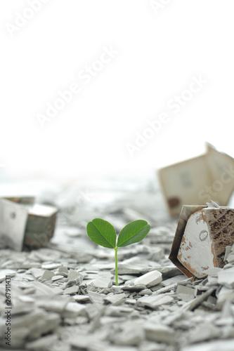 災害から月日が経ち瓦礫の中から緑や花が再生した街と人々 Wallpaper Mural