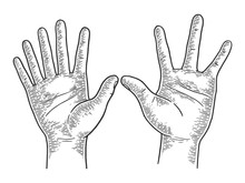 Unusual Hands With Six And Four Fingers Sketch Engraving Vector Illustration. Scratch Board Style Imitation. Black And White Hand Drawn Image.