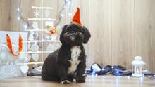 Cute Black Dog With Santa Hat