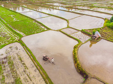 The Rice Fields Are Flooded Wi...