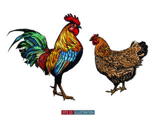 Hand drawn rooster and chicken isolated. Engraved style vector illustration. Template for your design works.