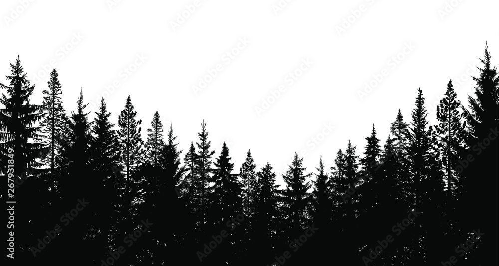 Fototapety, obrazy: Abstract background. Forest wilderness landscape. Pine tree silhouettes.  Template for your design works. Vector illustration.