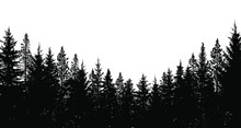 Abstract Background. Forest Wilderness Landscape. Pine Tree Silhouettes.  Template For Your Design Works. Vector Illustration.