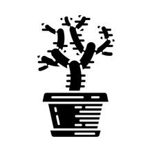 Teddy Bear Cholla Cactus In Pot Glyph Icon