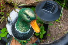 Close-up Of A Decorative Duck ...