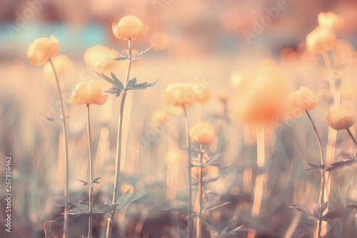 Türaufkleber Makrofotografie spring or summer flowers background / vintage toning nature landscape flowers