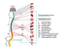 Infographics Scheme Of Anatomi...