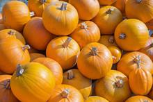 Little Orange Pumpkins Pile. A...