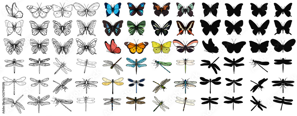 Fototapeta vector isolated set of multicolored butterflies and dragonflies