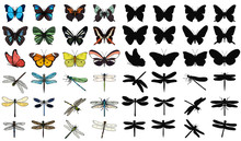 Isolated Set Of Multicolored Butterflies And Dragonflies On A White Background