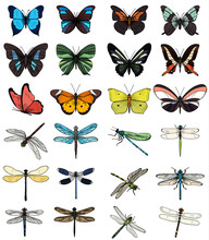 Set Of Multicolored Butterflies And Dragonflies On A White Background