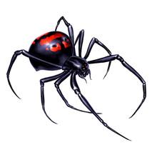 Black Widow Spider On White Ba...