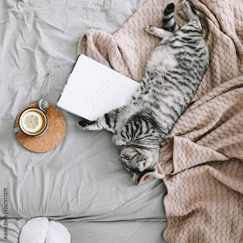 Obraz Cute cat sleeping at home. Book and cup of lemon tea with home decor on the warm soft bed. Scandinavian style, hygge, weekend cozy concept. - fototapety do salonu