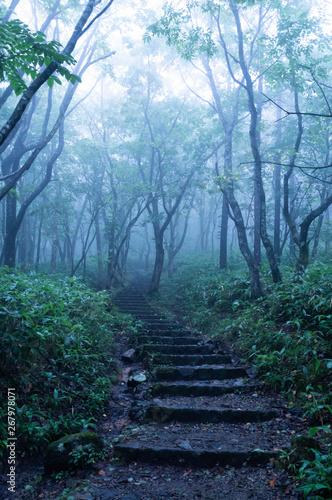 霧の森 Canvas Print