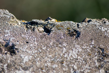 Marode Steinplatte Mit Abgebro...