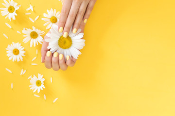 Stylish trendy female manicure. Daisy flower in hand with a beautiful manicure. yellow background