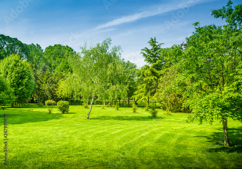 Poster Lime groen a backyard and garden with manu trees and grass on lawn