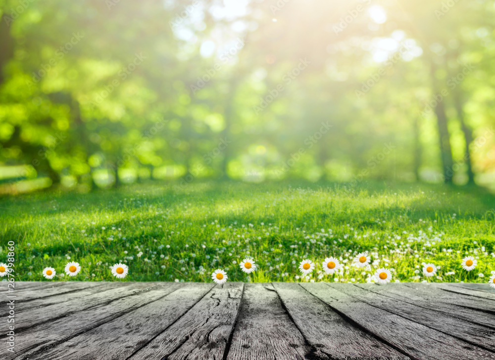 Fototapety, obrazy: Wooden table and spring forest background
