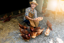 Farmers Are Smiling, Happy By Collecting Many Fresh Eggs, Which Is A Product From The Hens In The Farm, To Chicken Farm Concept.