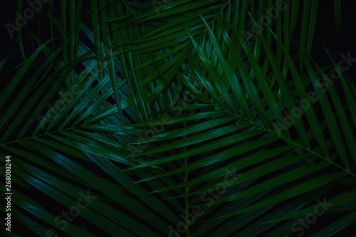 Fotobehang Macrofotografie Green leaves Palm texture background dark tone at phuket Thailand