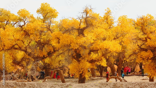 Bright yellow fall at Huyanglin Scenic Area