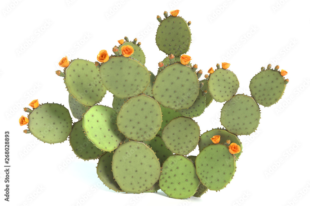 Fototapeta 3d illustration of a prickly pear cactus plant