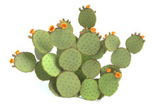 3d Illustration Of A Prickly Pear Cactus Plant
