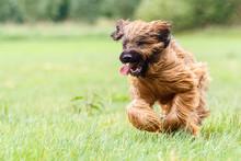 Running Dog Flattens Fur