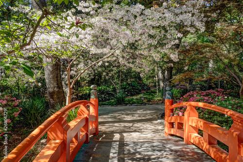 Keuken foto achterwand Kersenbloesem Orange Bridge over Pond