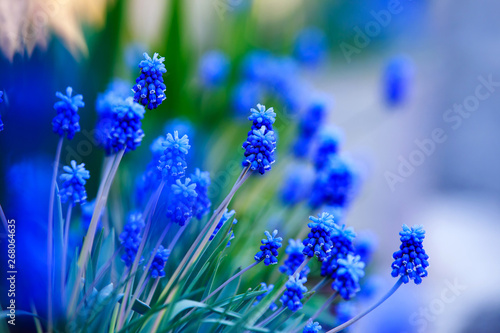 beautiful blue flowers - 268064635