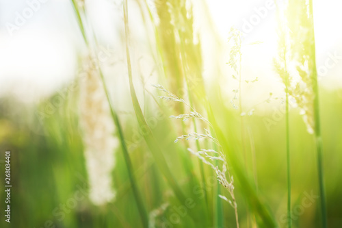 Green grass in the summer forest in the sunlight Canvas Print