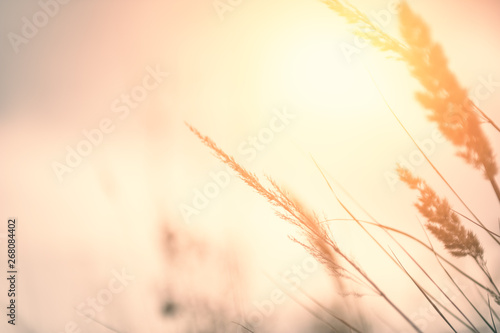 Photo  Wild grass in a field at sunset