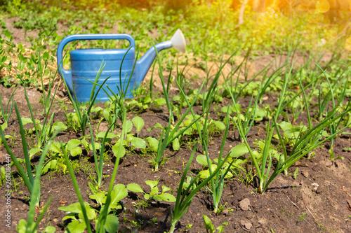 Photo farming, gardening, agriculture concept - garden bed at summer farm