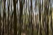 Wie ein impressionistisches Gemälde, lichter Buchenwald  am Morgen - Abstraktion