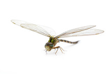 Image Of Dragonfly On A White ...