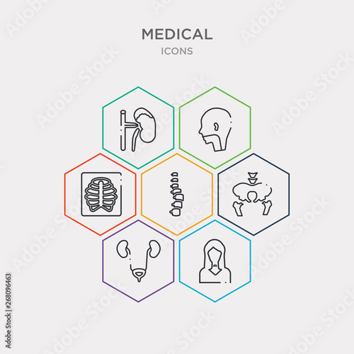 Photographie  simple set of thyroid gland, bladder, pelvic area, vertebra icons, contains such as icons sternum, pharynx, adrenal gland and more