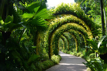 Flower Arches In A Beautiful O...