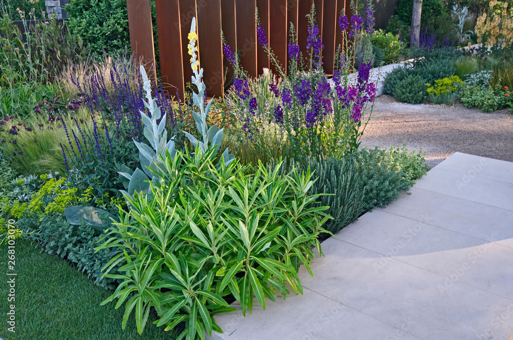 Fototapeta Inspired by travel this contemporary gravel garden gives an exotic air with close up detail with Verbascums and Salvia